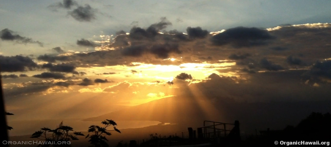 Maui amazing sunset gold Organic Hawaii 1080 x 480 OH HD photo