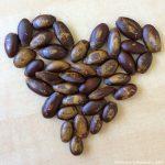 Soursop graviola organic seeds