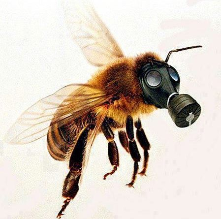 Honeybee wearing a gas mask to protect from toxic chemicals, insecticides